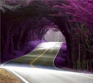 zydintis kelias