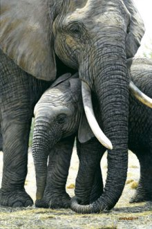 gentle-touch_elephant-mothe